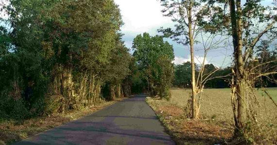 Route de Villevaudé Nord